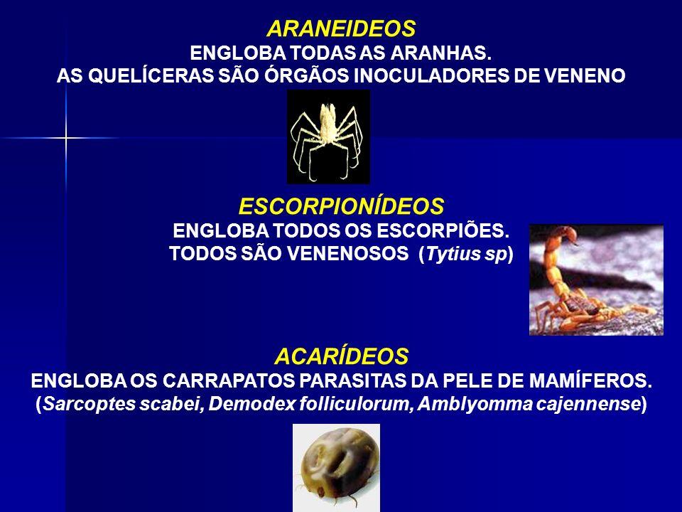 ORDENS DOS ARACNÍDEOS