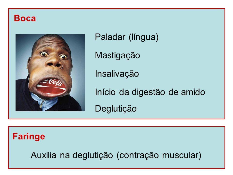 Boca Faringe Auxilia na deglutição (contração muscular) Paladar (língua) Mastigação Insalivação Deglutição Início da digestão de amido