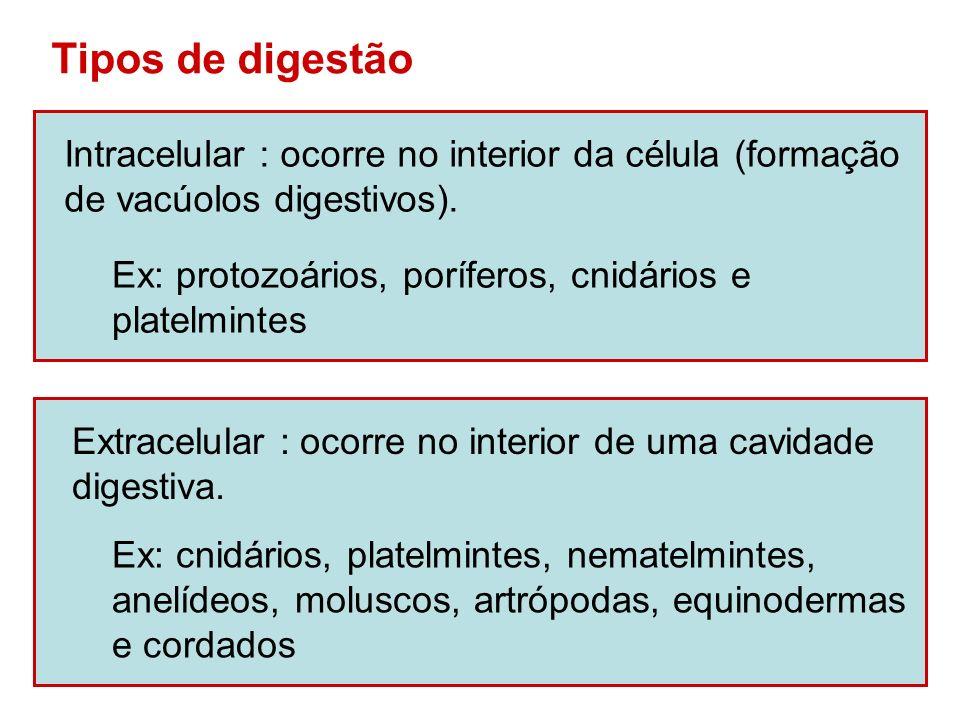 Tipos de digestão Intracelular : ocorre no interior da célula (formação de vacúolos digestivos). Ex: protozoários, poríferos, cnidários e platelmintes