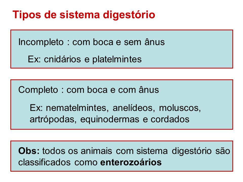 Tipos de sistema digestório Incompleto : com boca e sem ânus Ex: cnidários e platelmintes Completo : com boca e com ânus Ex: nematelmintes, anelídeos,