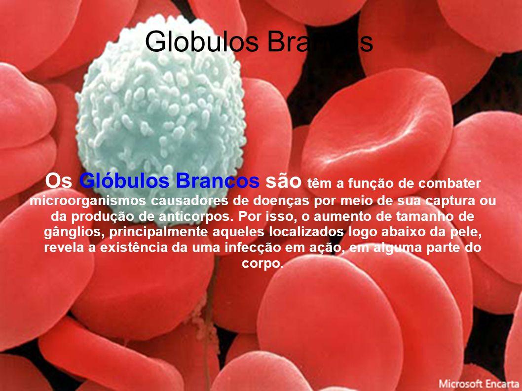 Globulos Brancos Os Glóbulos Brancos são têm a função de combater microorganismos causadores de doenças por meio de sua captura ou da produção de anti
