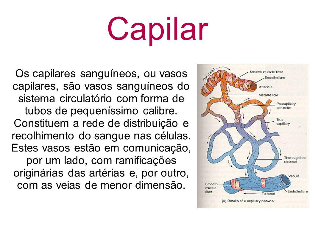 Capilar Os capilares sanguíneos, ou vasos capilares, são vasos sanguíneos do sistema circulatório com forma de tubos de pequeníssimo calibre. Constitu