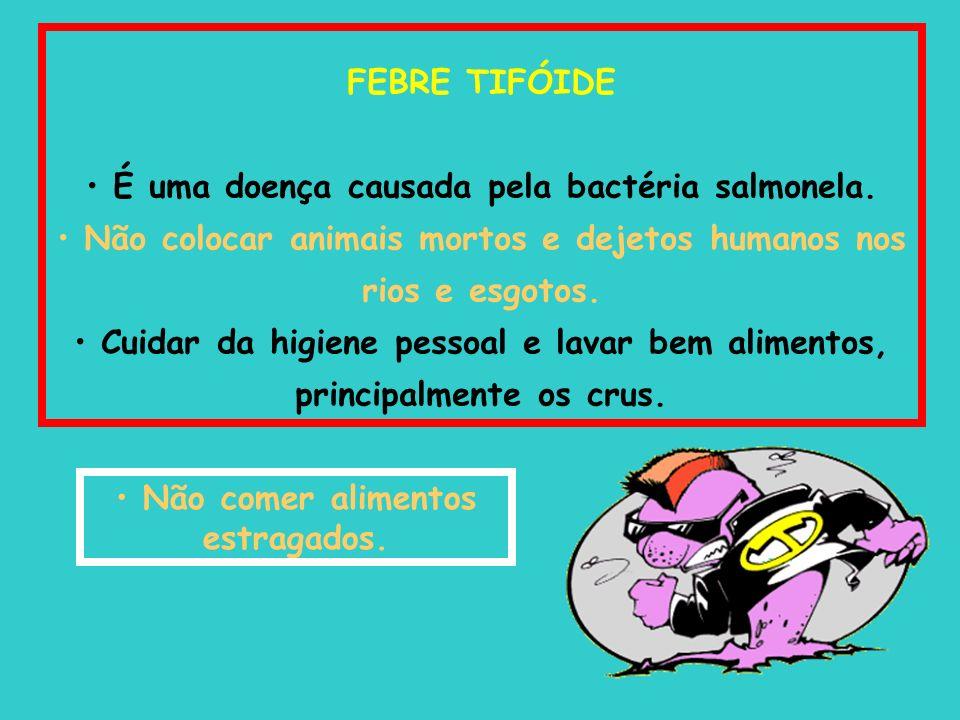 FEBRE TIFÓIDE É uma doença causada pela bactéria salmonela. Não colocar animais mortos e dejetos humanos nos rios e esgotos. Cuidar da higiene pessoal