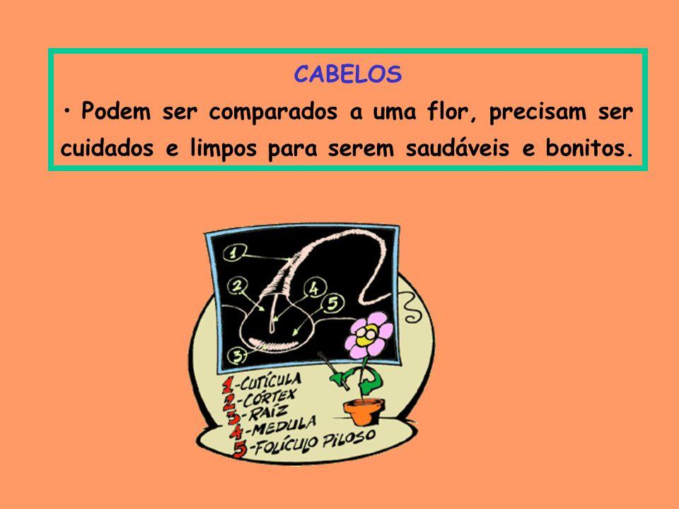 CABELOS Podem ser comparados a uma flor, precisam ser cuidados e limpos para serem saudáveis e bonitos.