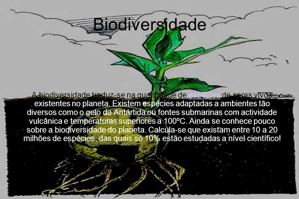 Biodiversidade A biodiversidade traduz-se na quantidade de espécies de seres vivos existentes no planeta. Existem espécies adaptadas a ambientes tão d