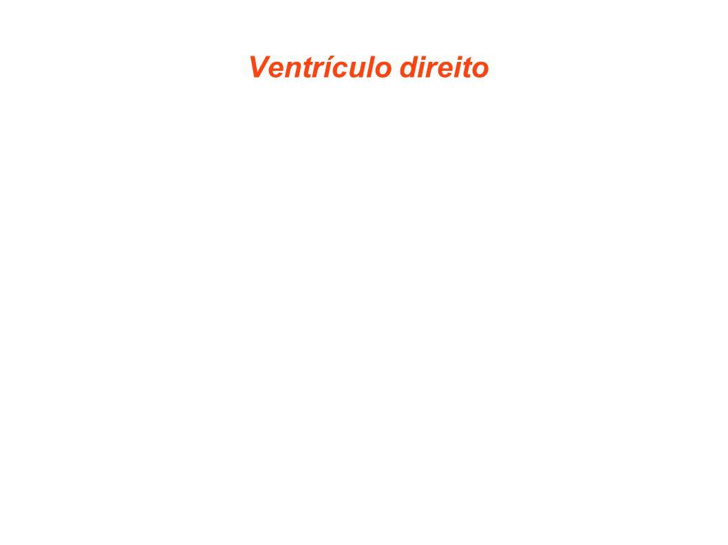 Ventrículo direito Ventrículo direito é a cavidade do coração responsável pelo bombeamento do sangue na circulação pulmonar. Recebe o sangue venoso do