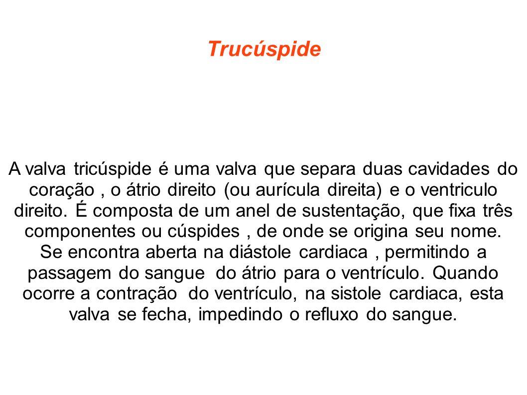 Trucúspide A valva tricúspide é uma valva que separa duas cavidades do coração, o átrio direito (ou aurícula direita) e o ventriculo direito. É compos
