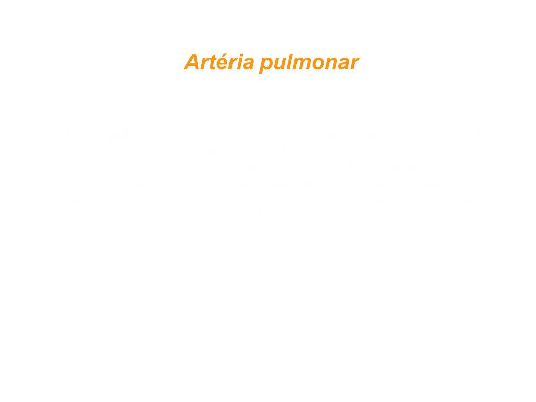 Artéria pulmonar As artérias pulmonares levam sangue do coração para os pulmões. Elas são as únicas artérias (além das artérias umbilicais) que transp