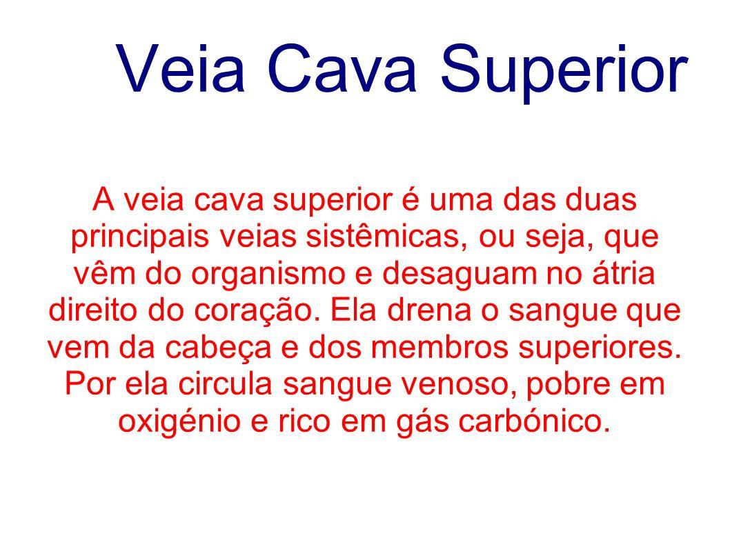Veia Cava Superior A veia cava superior é uma das duas principais veias sistêmicas, ou seja, que vêm do organismo e desaguam no átria direito do coraç