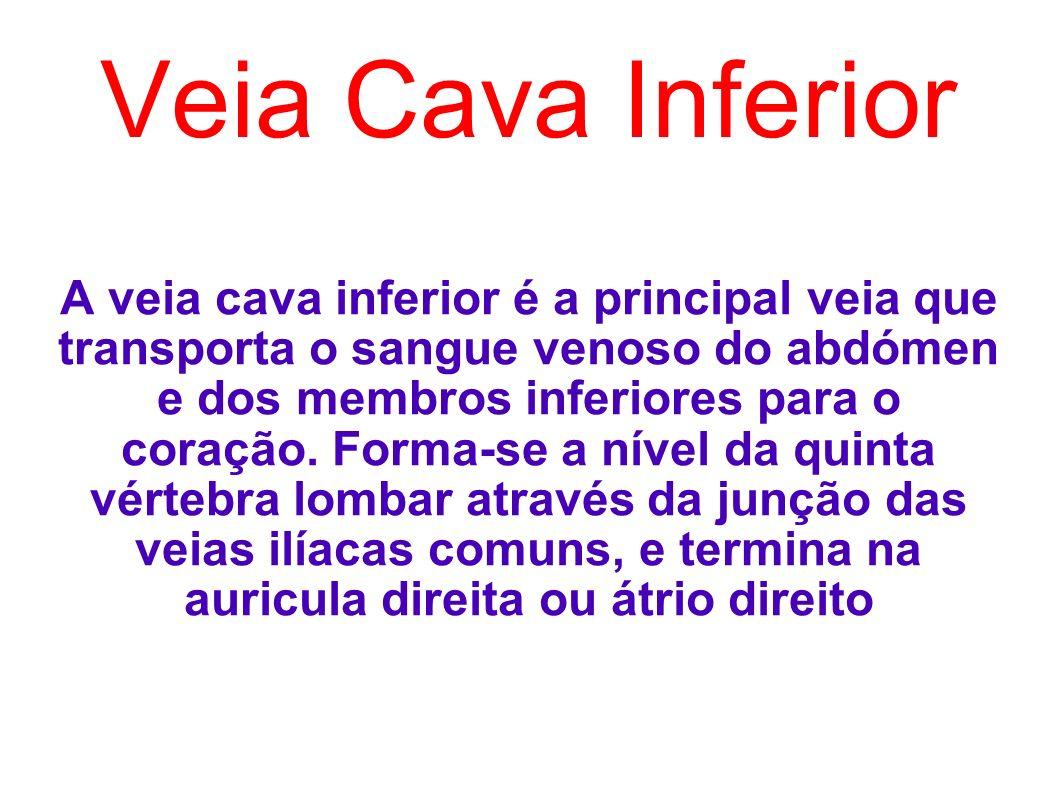 Veia Cava Inferior A veia cava inferior é a principal veia que transporta o sangue venoso do abdómen e dos membros inferiores para o coração. Forma-se