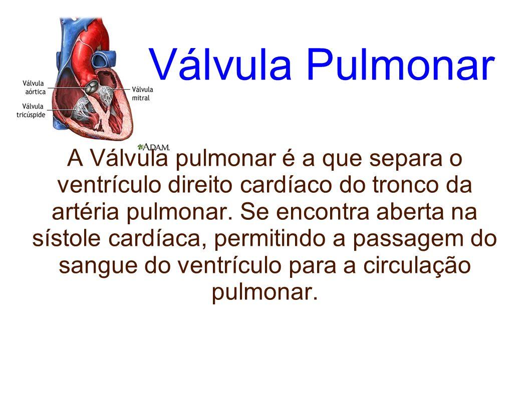 Auricula direita Esta cavidade do coração recebe o sangue venoso proveniente das veias cavas e envia-o, através da válvula tricúspide, para o ventrículo direito.