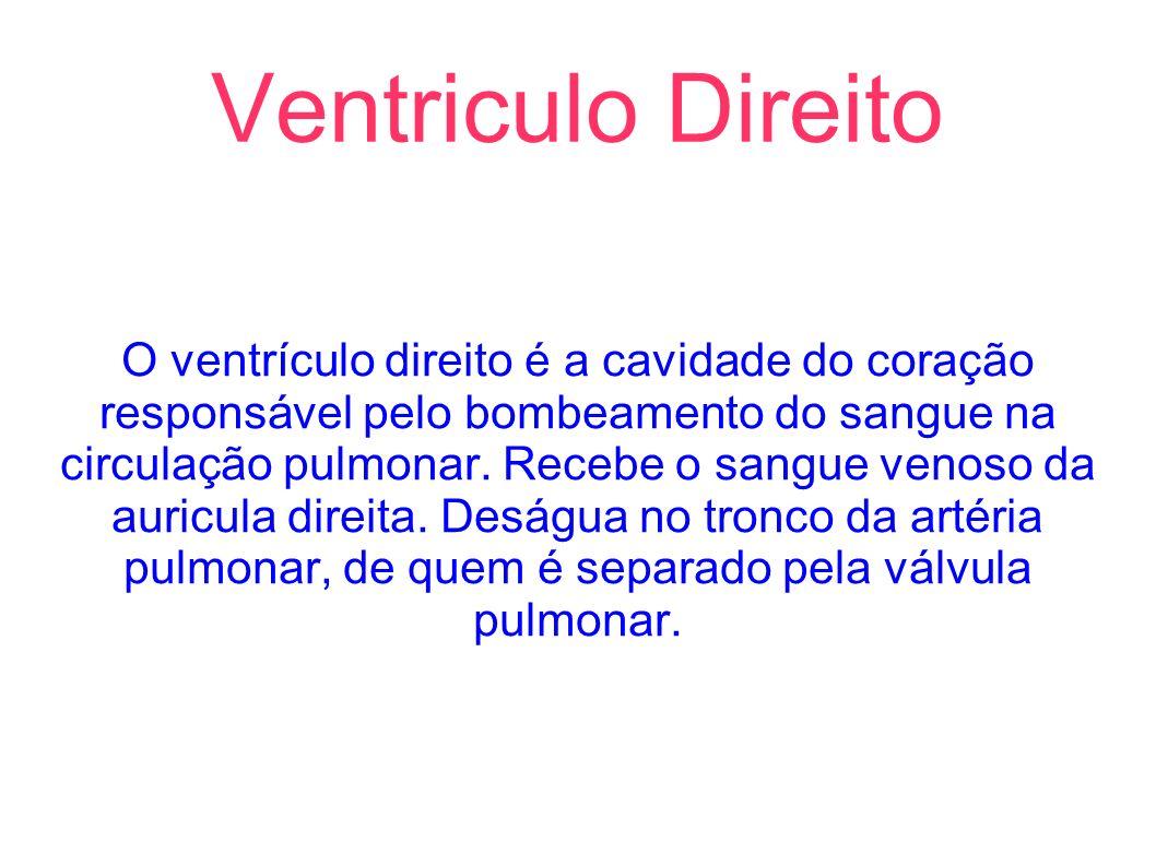 Ventriculo Direito O ventrículo direito é a cavidade do coração responsável pelo bombeamento do sangue na circulação pulmonar. Recebe o sangue venoso