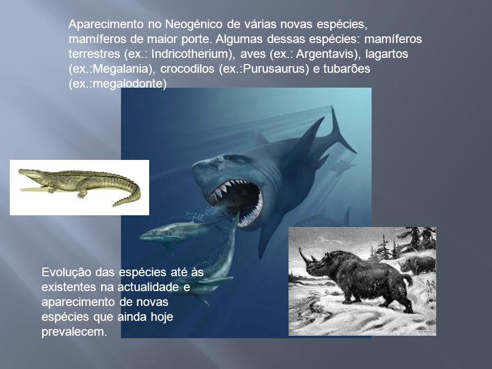 Aparecimento no Neogénico de várias novas espécies, mamíferos de maior porte. Algumas dessas espécies: mamíferos terrestres (ex.: Indricotherium), ave