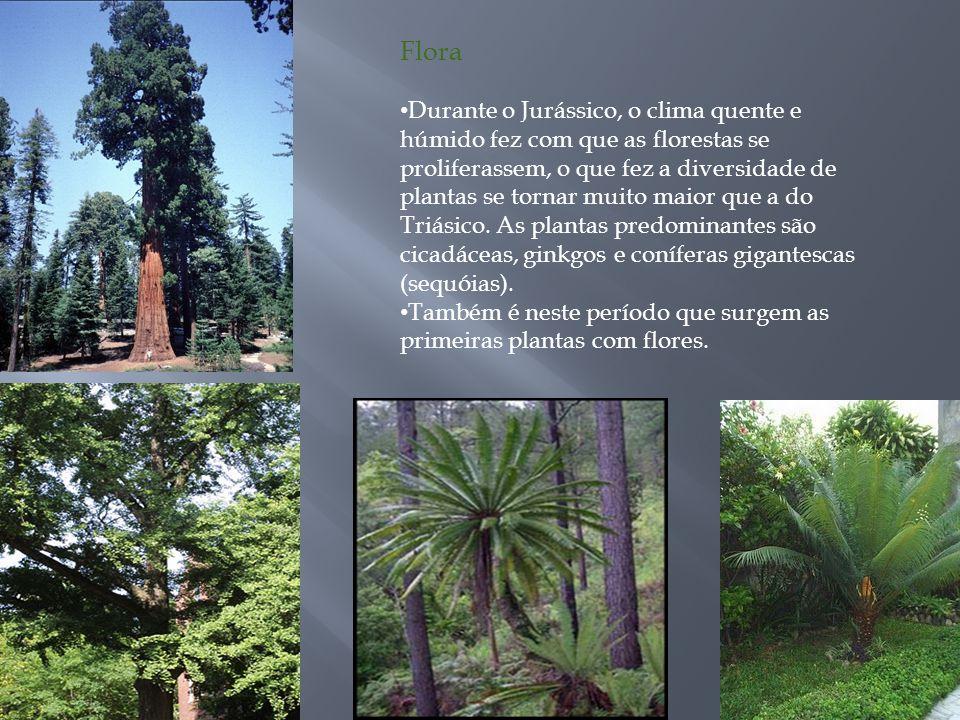 Flora Durante o Jurássico, o clima quente e húmido fez com que as florestas se proliferassem, o que fez a diversidade de plantas se tornar muito maior