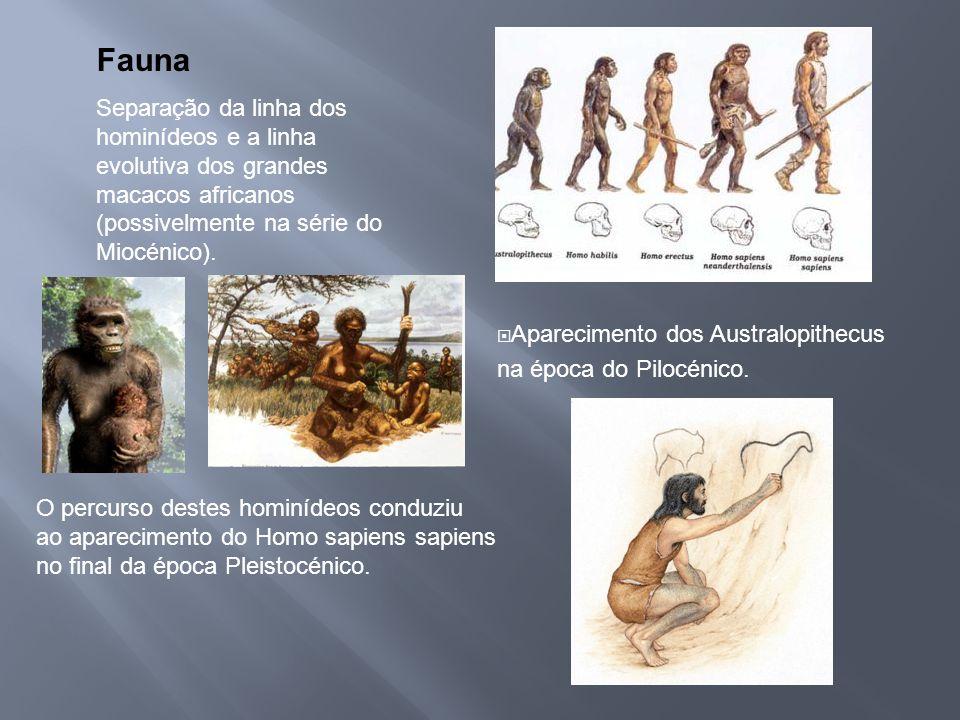Fauna Separação da linha dos hominídeos e a linha evolutiva dos grandes macacos africanos (possivelmente na série do Miocénico). Aparecimento dos Aust