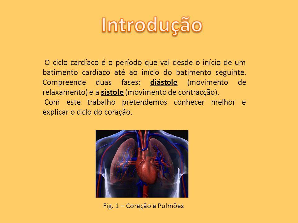 O coração é um órgão muscular muito activo, situado na cavidade torácica e é dividido em quatro cavidades: aurículas direita/esquerda e ventrículos direito/esquerdo.