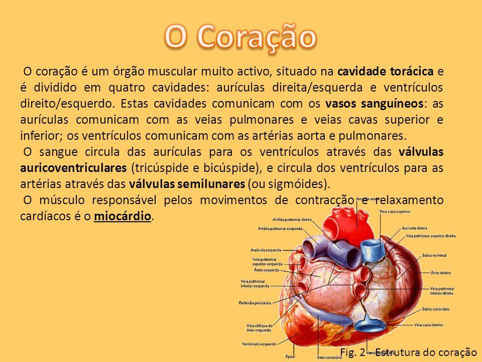O coração é um órgão muscular muito activo, situado na cavidade torácica e é dividido em quatro cavidades: aurículas direita/esquerda e ventrículos di