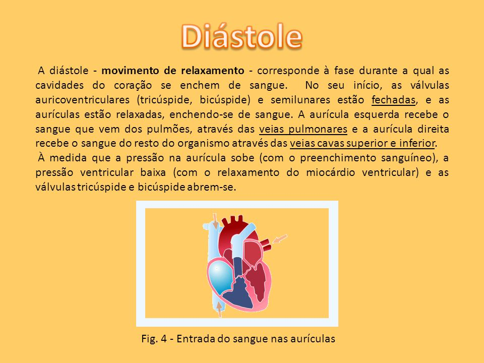 A diástole - movimento de relaxamento - corresponde à fase durante a qual as cavidades do coração se enchem de sangue. No seu início, as válvulas auri