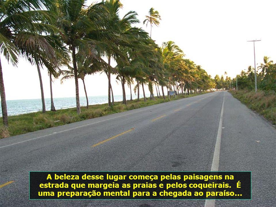A beleza desse lugar começa pelas paisagens na estrada que margeia as praias e pelos coqueirais.