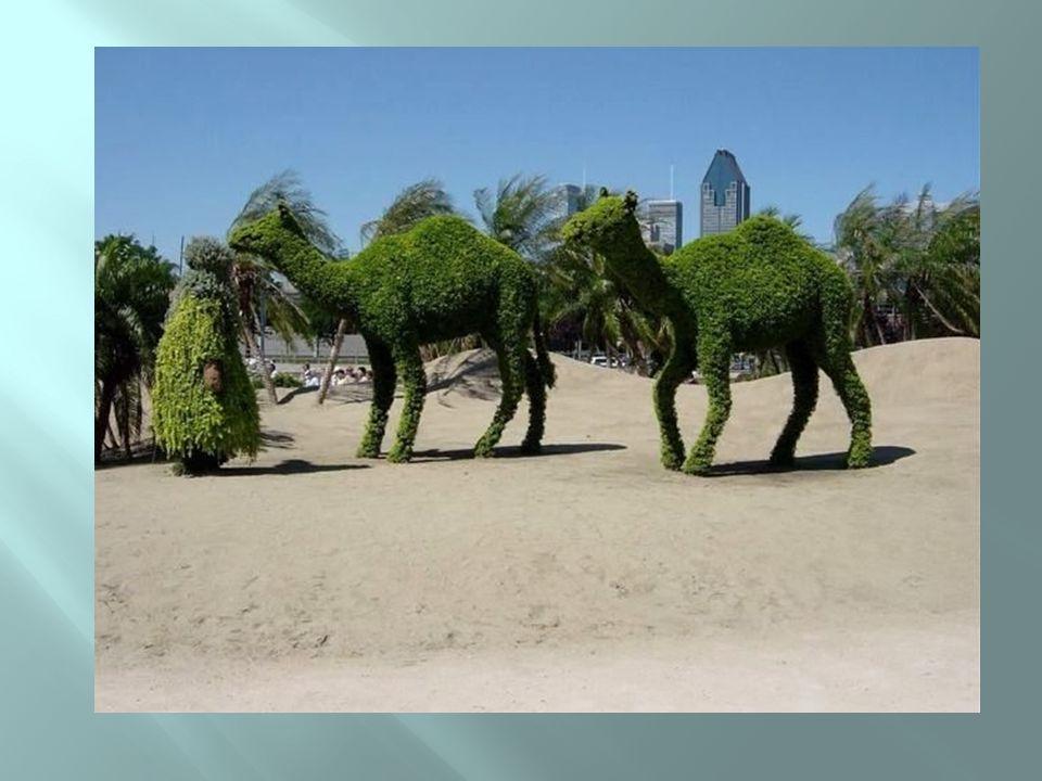 Camelos ou arbustos?