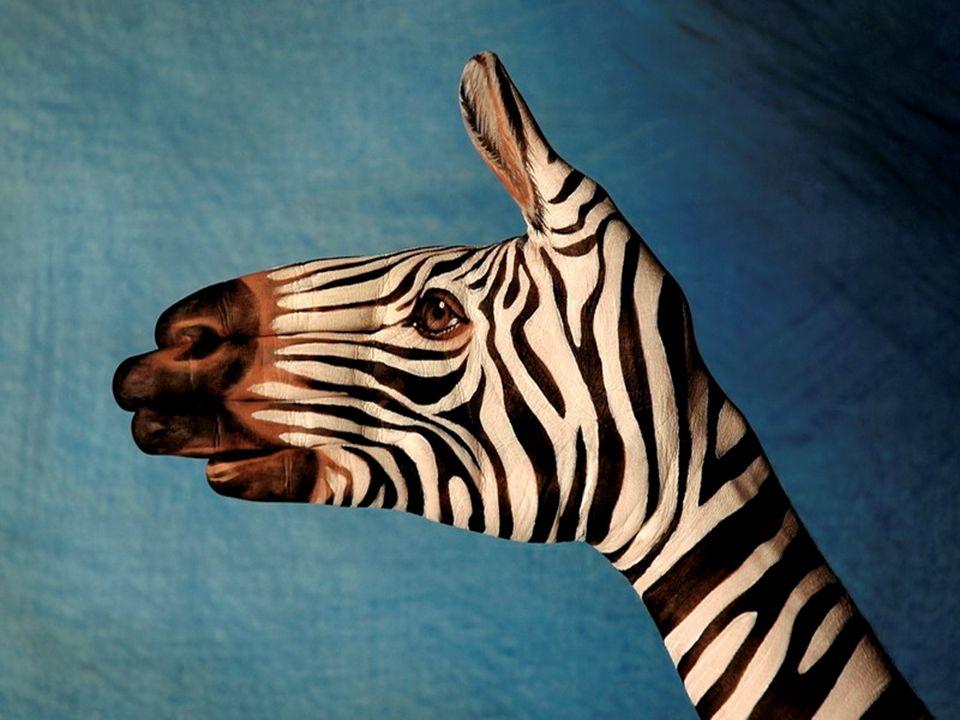 Mão ou Zebra?