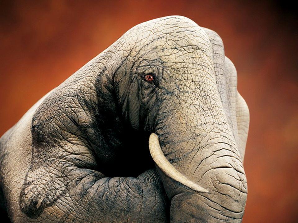 Elefante ou mão?