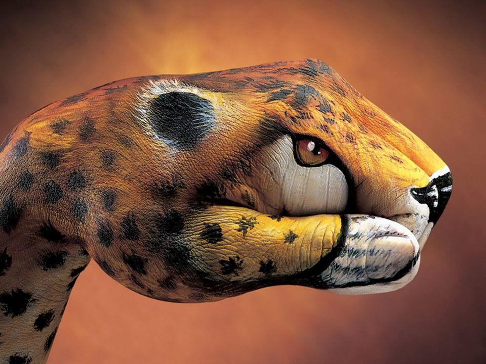 Leopardo ou mão?