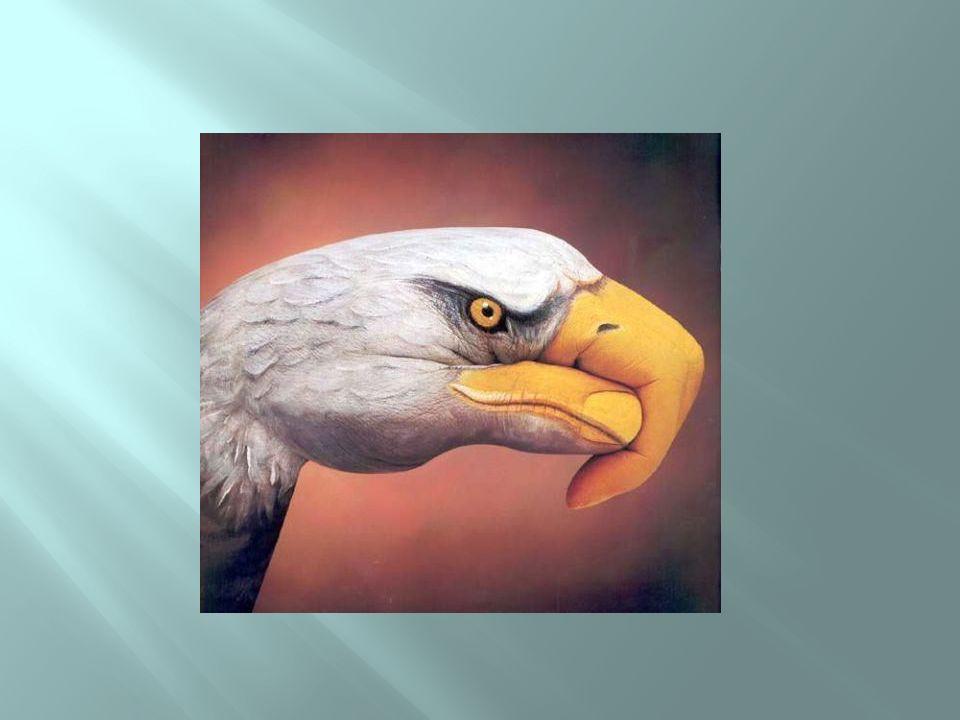 Mão ou águia?