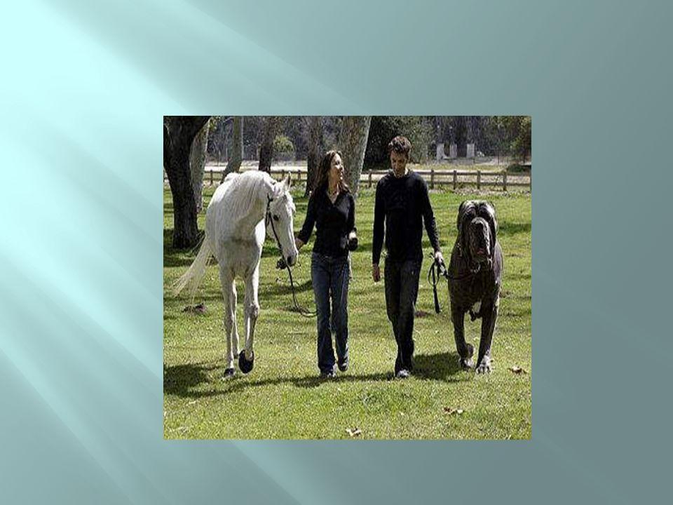 Cão ou cavalo?