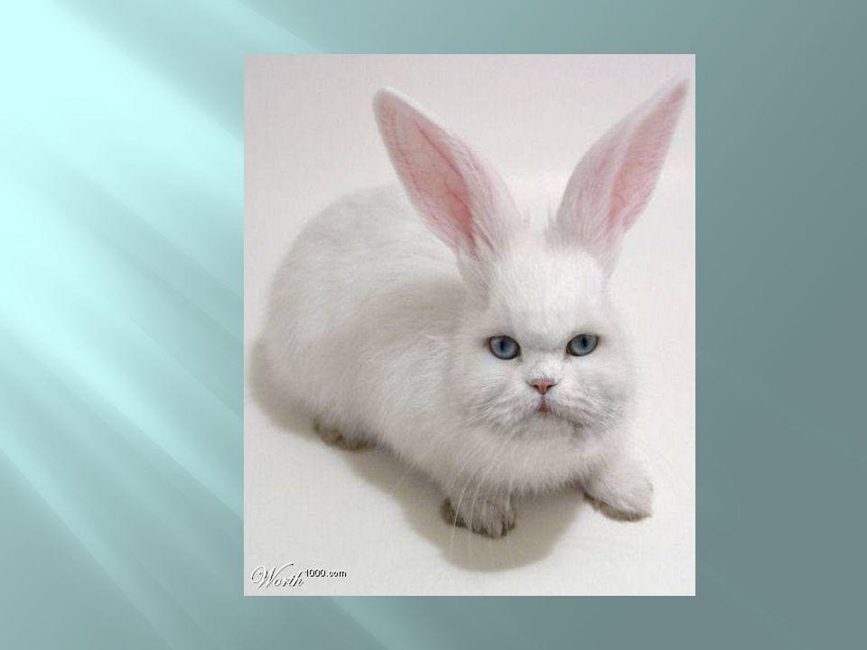 Coelho ou gato?