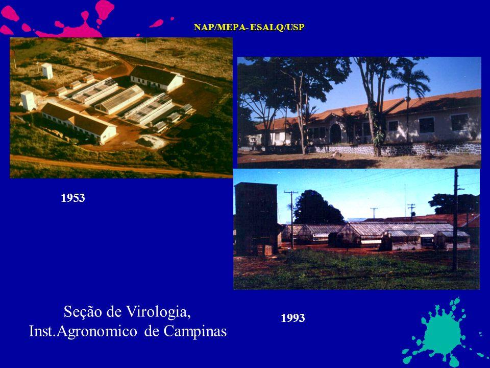 NAP/MEPA- ESALQ/USP 1953 1993 Seção de Virologia, Inst.Agronomico de Campinas