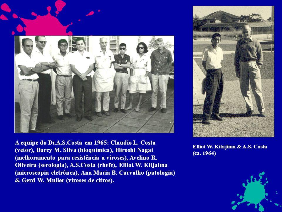 A equipe do Dr.A.S.Costa em 1965: Claudio L. Costa (vetor), Darcy M. Silva (bioquímica), Hiroshi Nagai (melhoramento para resistência a viroses), Avel