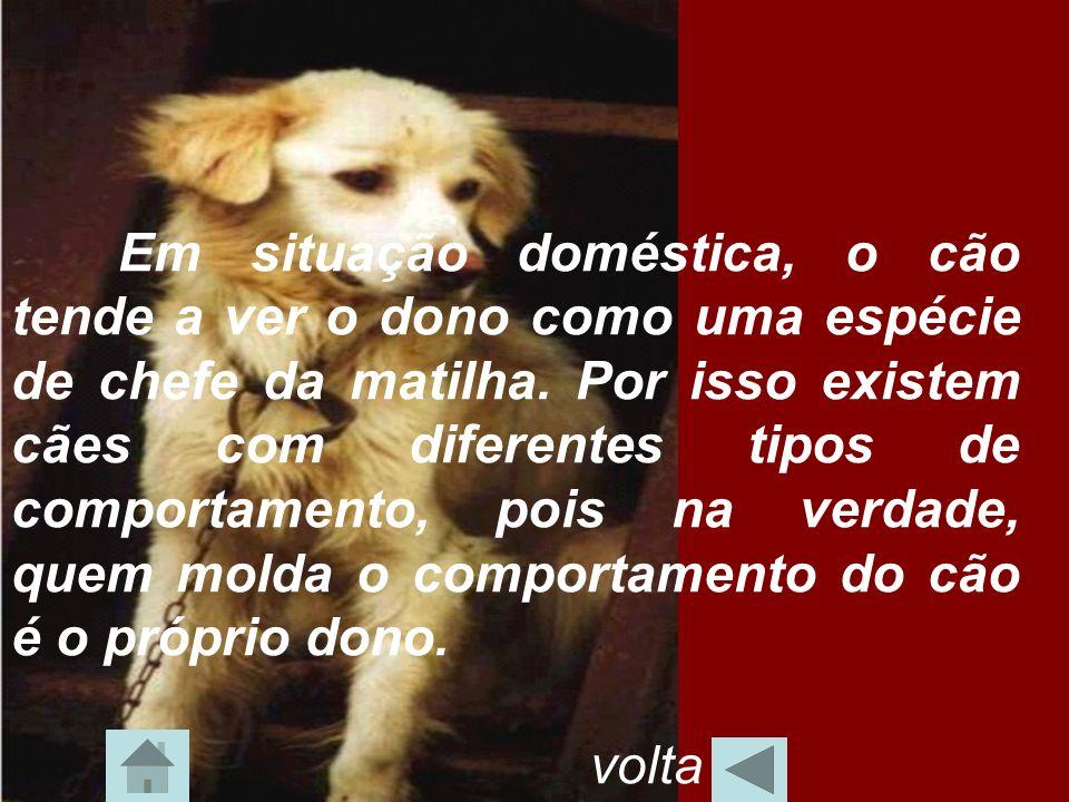 Em situação doméstica, o cão tende a ver o dono como uma espécie de chefe da matilha. Por isso existem cães com diferentes tipos de comportamento, poi