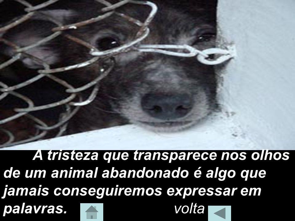 A tristeza que transparece nos olhos de um animal abandonado é algo que jamais conseguiremos expressar em palavras. volta