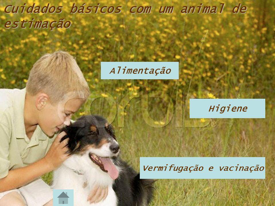 Cuidados básicos com um animal de estimação Alimentação Higiene Vermifugação e vacinação