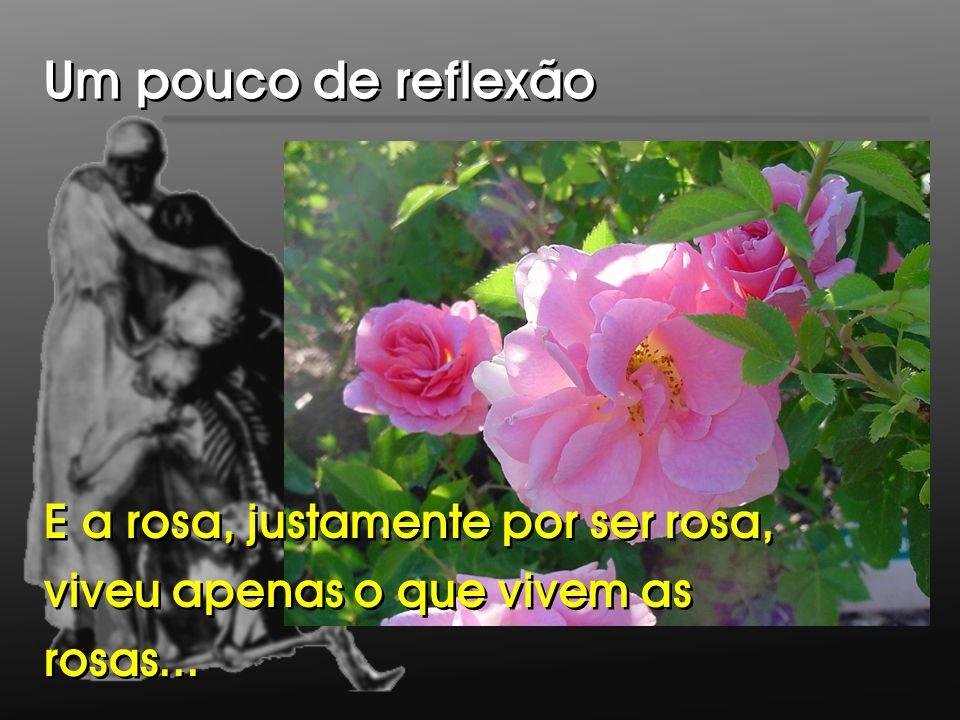 E a rosa, justamente por ser rosa, viveu apenas o que vivem as rosas... E a rosa, justamente por ser rosa, viveu apenas o que vivem as rosas... Um pou