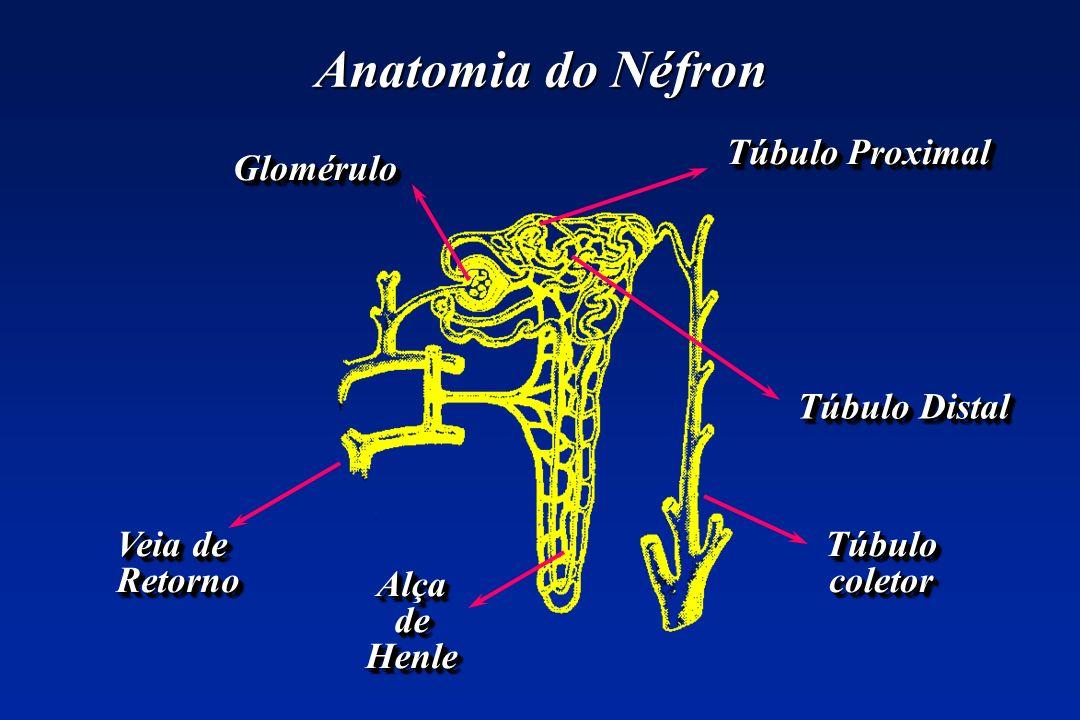 Anatomia do Néfron Veia de Retorno Retorno GloméruloGlomérulo Túbulo Proximal Túbulo Distal Túbulo Distal TúbulocoletorTúbulocoletor AlçadeHenleAlçade