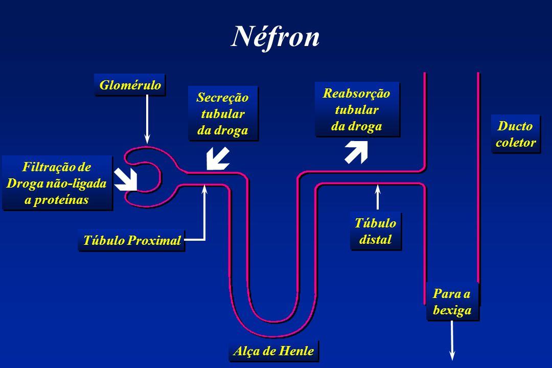 Néfron Glomérulo Alça de Henle Túbulo Proximal Ducto coletor Ducto coletor Para a bexiga Túbulo distal Túbulo distal Filtração de Droga não-ligada a p