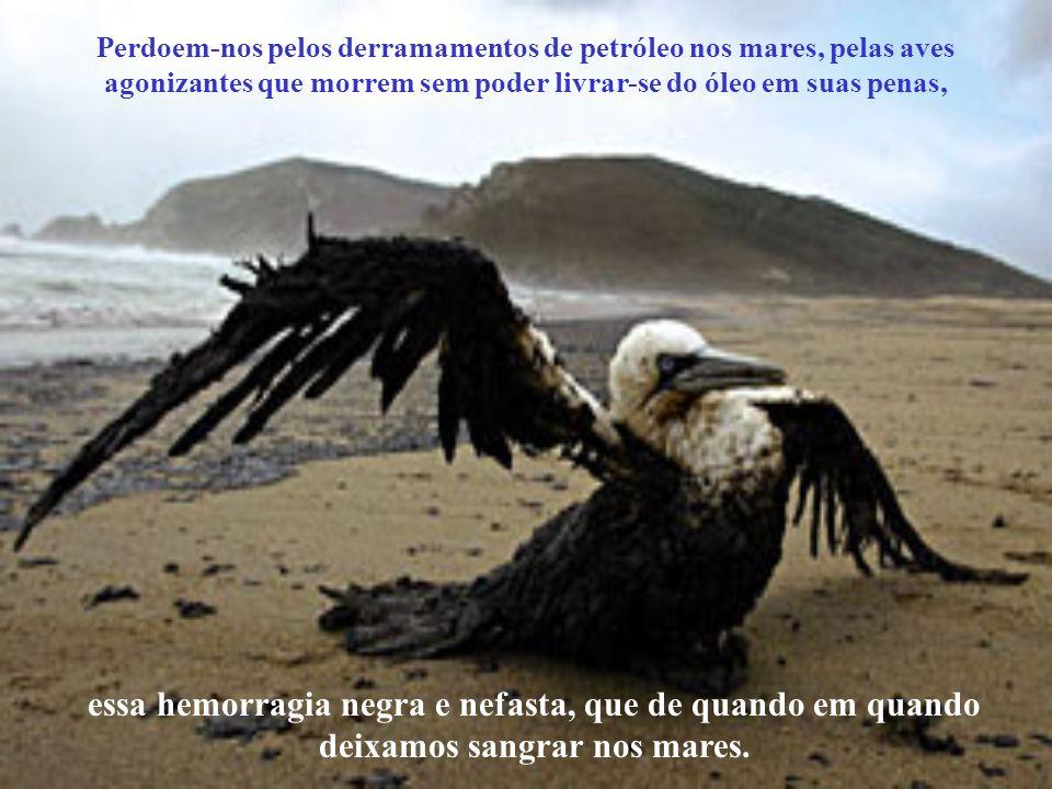 Perdoem-nos pela nossa falta de misericórdia, pela violação dos santuários ecológicos, pelo desmatamento, pela pesca indiscriminada e pela poluição do
