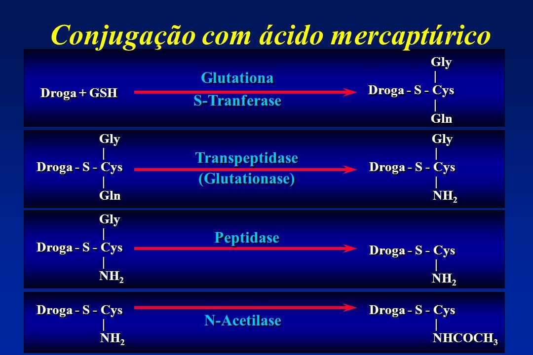 Conjugação com ácido mercaptúrico Droga + GSH Gly | Droga - S - Cys | Gln Gly | Droga - S - Cys | Gln Gly | Droga - S - Cys | Gln Gly | Droga - S - Cy