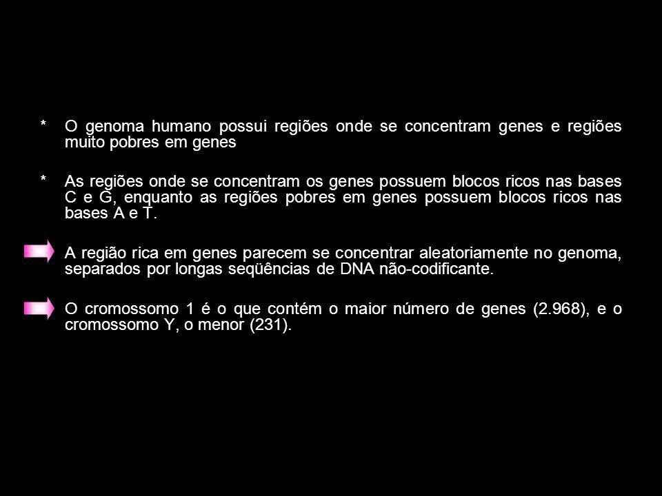*O genoma humano possui regiões onde se concentram genes e regiões muito pobres em genes *As regiões onde se concentram os genes possuem blocos ricos