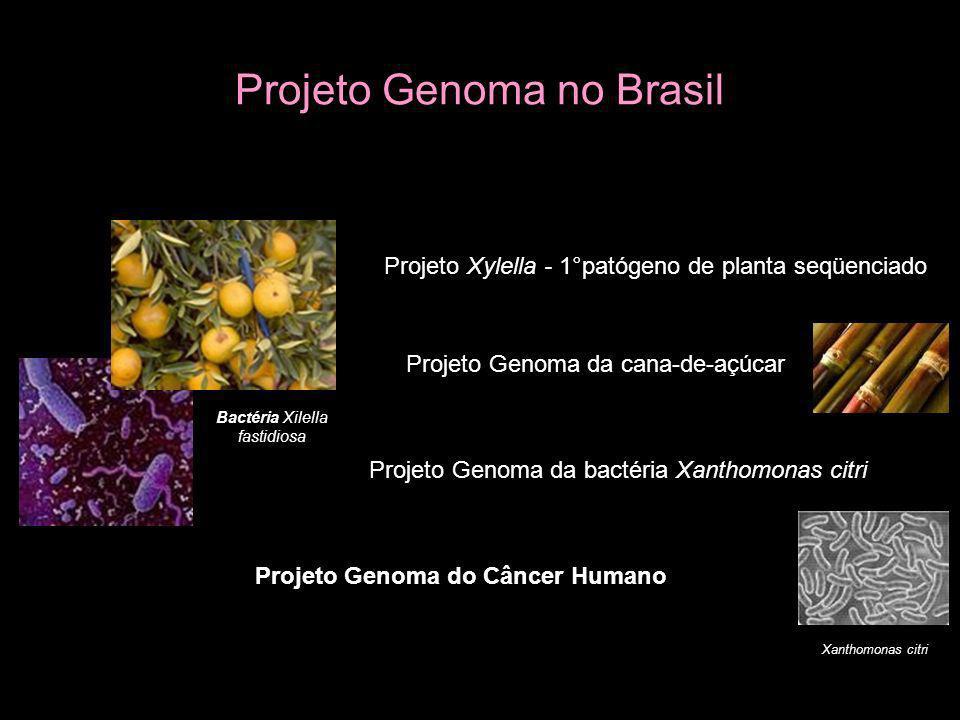 Projeto Genoma no Brasil Bactéria Xilella fastidiosa Projeto Xylella - 1°patógeno de planta seqüenciado Projeto Genoma da cana-de-açúcar Projeto Genom