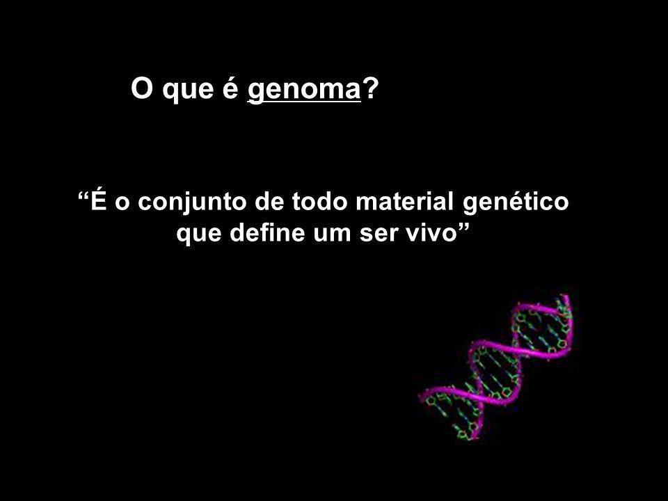 Como seqüenciar o DNA Subdivisão em fragmentos menores Amplificação- clonagem MÉTODO DE SANGER – técnica de seqüenciamento por terminação de cadeia