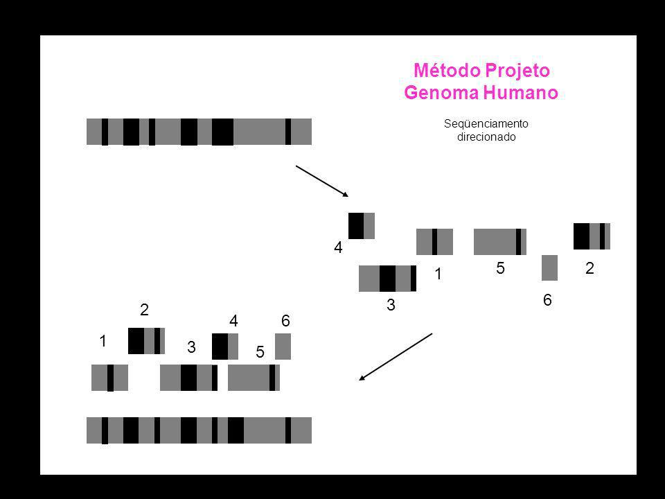 1 1 2 3 4 5 4 3 1 5 6 6 2 Método Projeto Genoma Humano Seqüenciamento direcionado