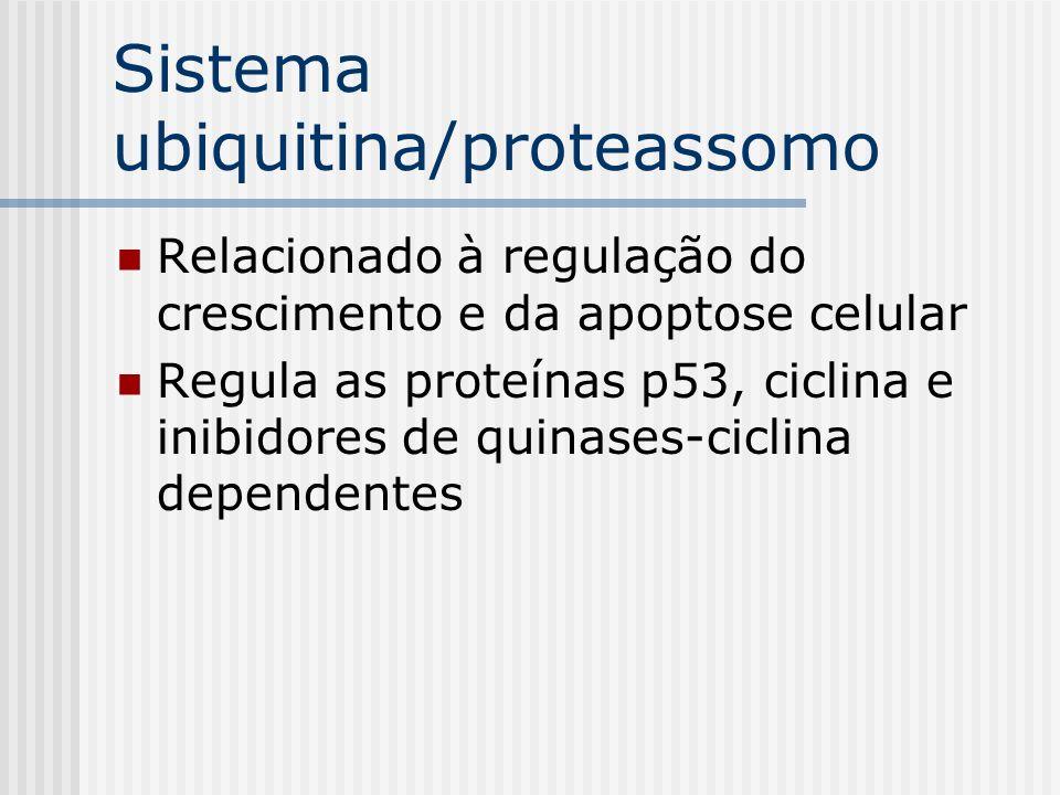 Sistema ubiquitina/proteassomo Relacionado à regulação do crescimento e da apoptose celular Regula as proteínas p53, ciclina e inibidores de quinases-