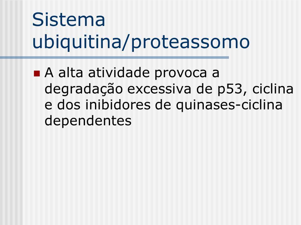 Sistema ubiquitina/proteassomo A alta atividade provoca a degradação excessiva de p53, ciclina e dos inibidores de quinases-ciclina dependentes
