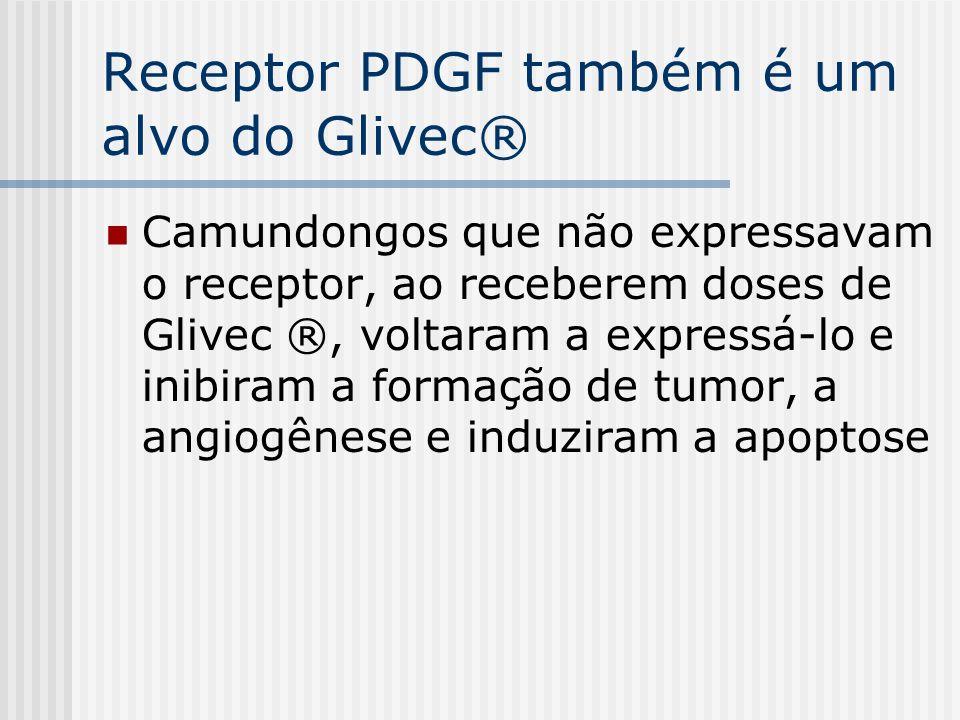 Receptor PDGF também é um alvo do Glivec® Camundongos que não expressavam o receptor, ao receberem doses de Glivec ®, voltaram a expressá-lo e inibira