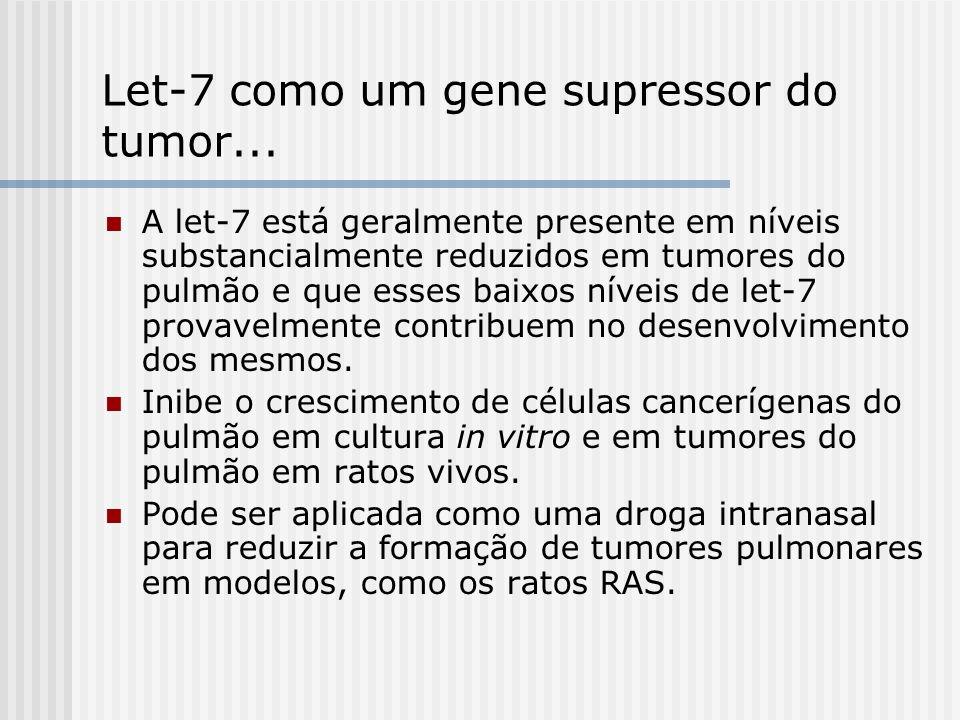 Let-7 como um gene supressor do tumor... A let-7 está geralmente presente em níveis substancialmente reduzidos em tumores do pulmão e que esses baixos