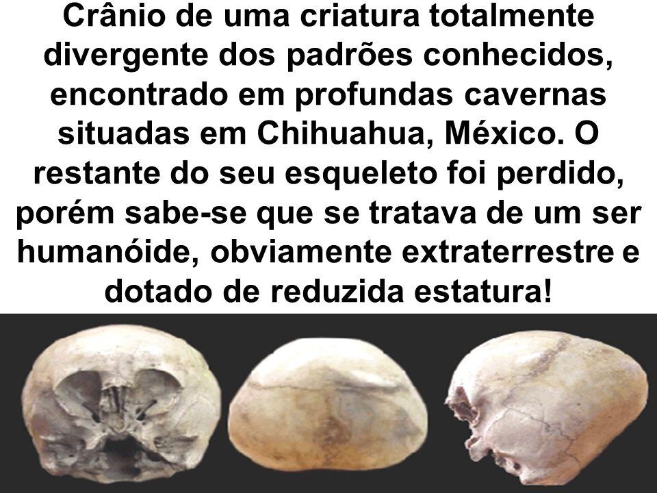 Crânio de uma criatura totalmente divergente dos padrões conhecidos, encontrado em profundas cavernas situadas em Chihuahua, México. O restante do seu