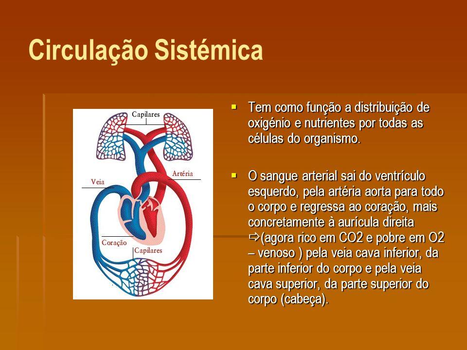 Circulação Sistémica Tem como função a distribuição de oxigénio e nutrientes por todas as células do organismo.